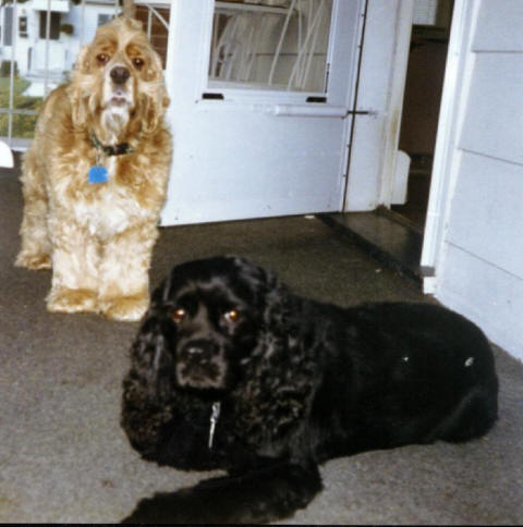 Toby & Buca - Justice Gina's Dogs, 1994-2010